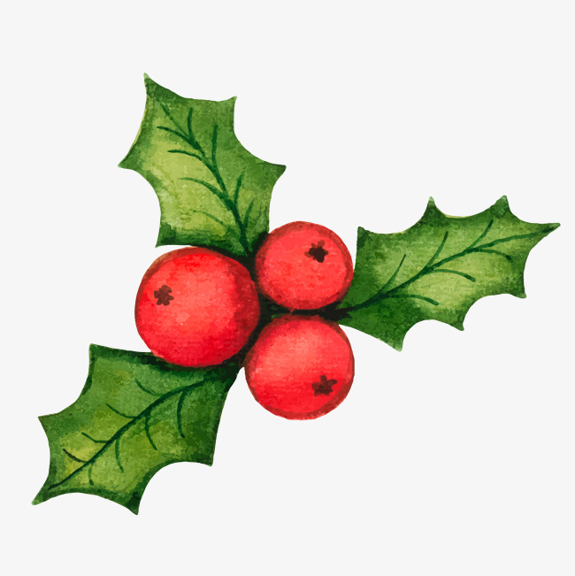 650x651 Christmas Holly Png, Vectors, Psd, And Icons For Free Download
