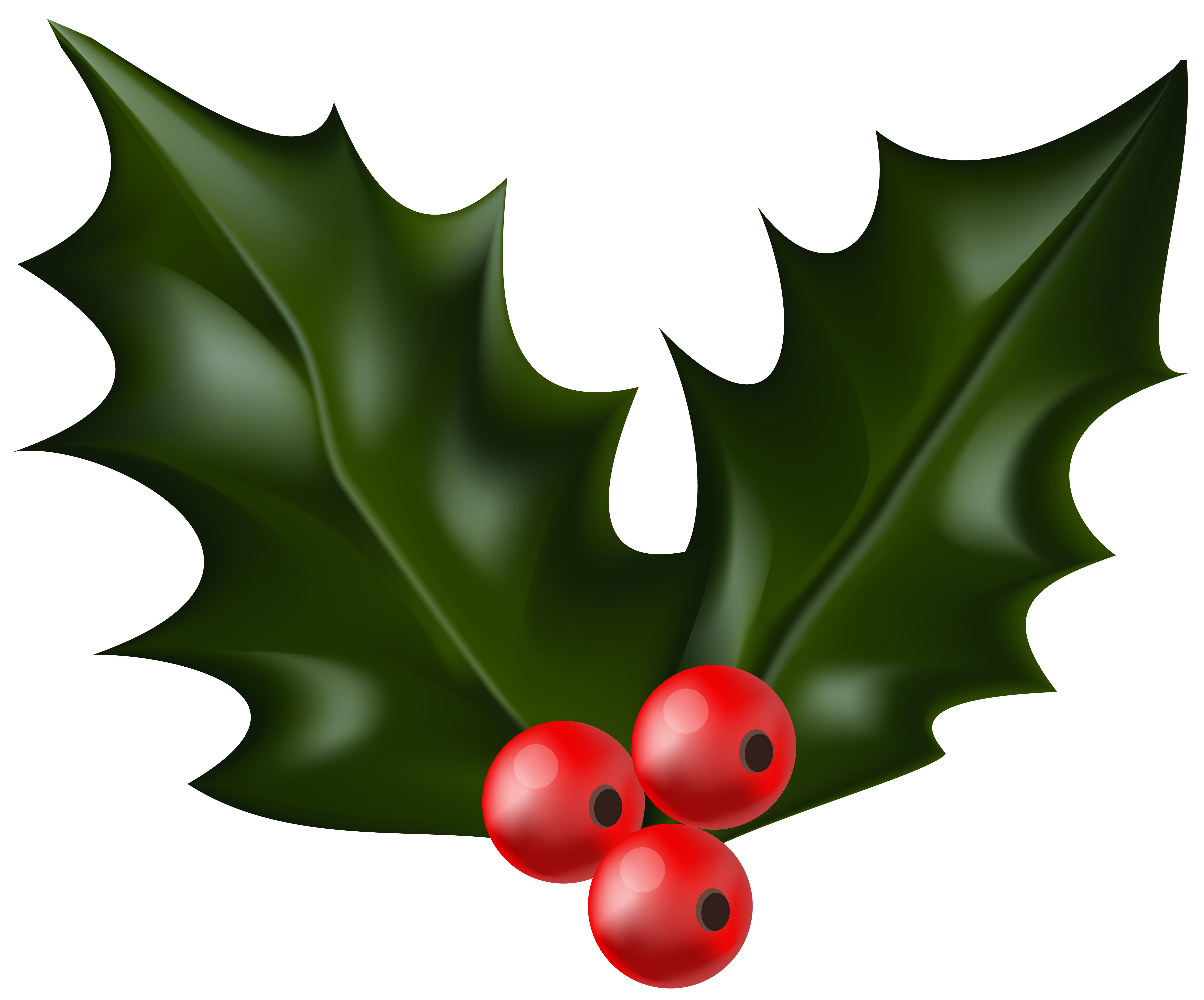6000x4982 Christmas Holly Mistletoe Clip Art