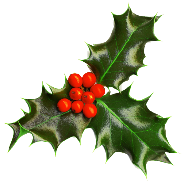 600x600 Graphics For Christmas Holly Graphics