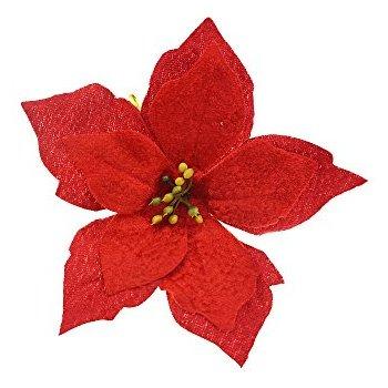 Christmas Poinsettia Pictures