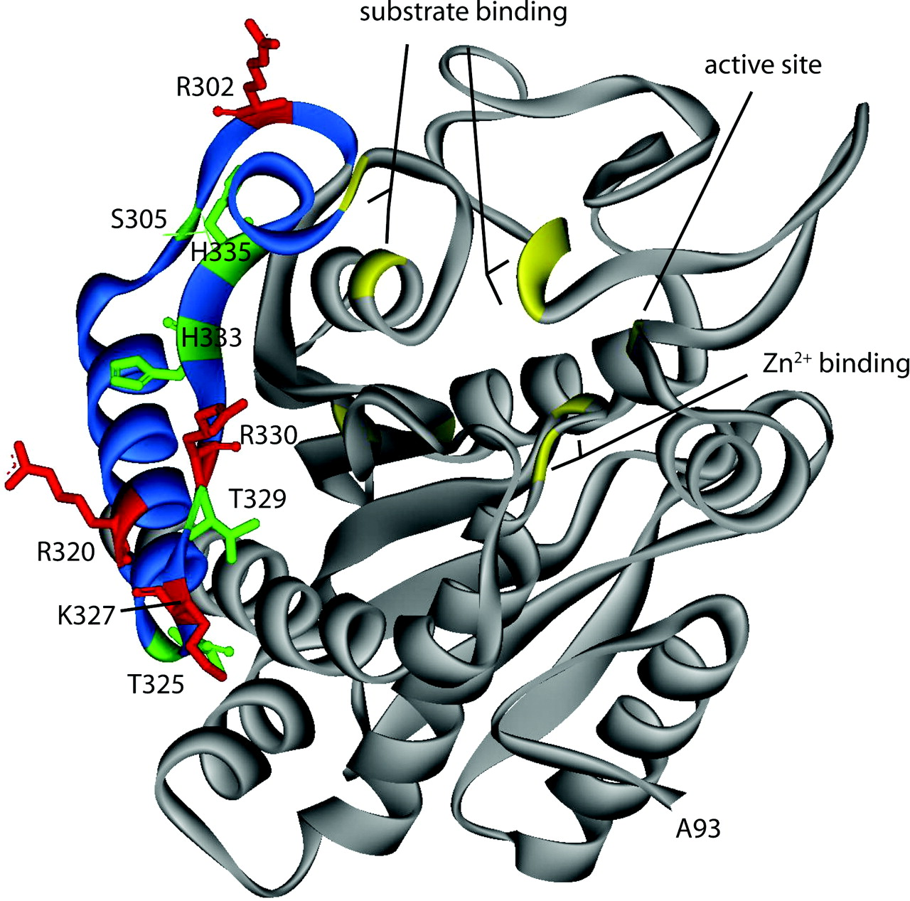 1280x1267 Regulation Of Fibrinolysis By Thrombin Activatable Fibrinolysis