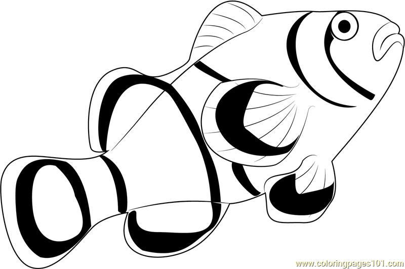 800x532 Clownfish Clipart Fish Coloring