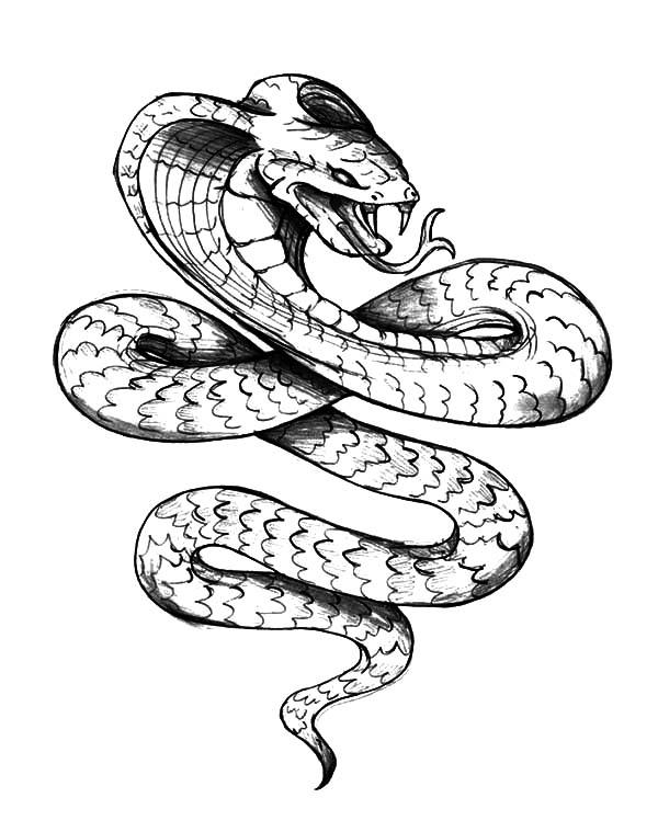 600x759 Drawn Cobra King Cobra