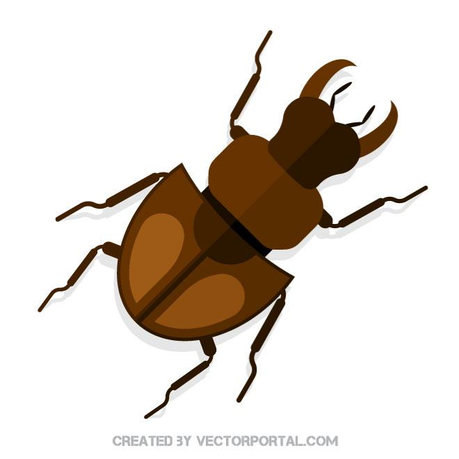660x660 Stag Beetle