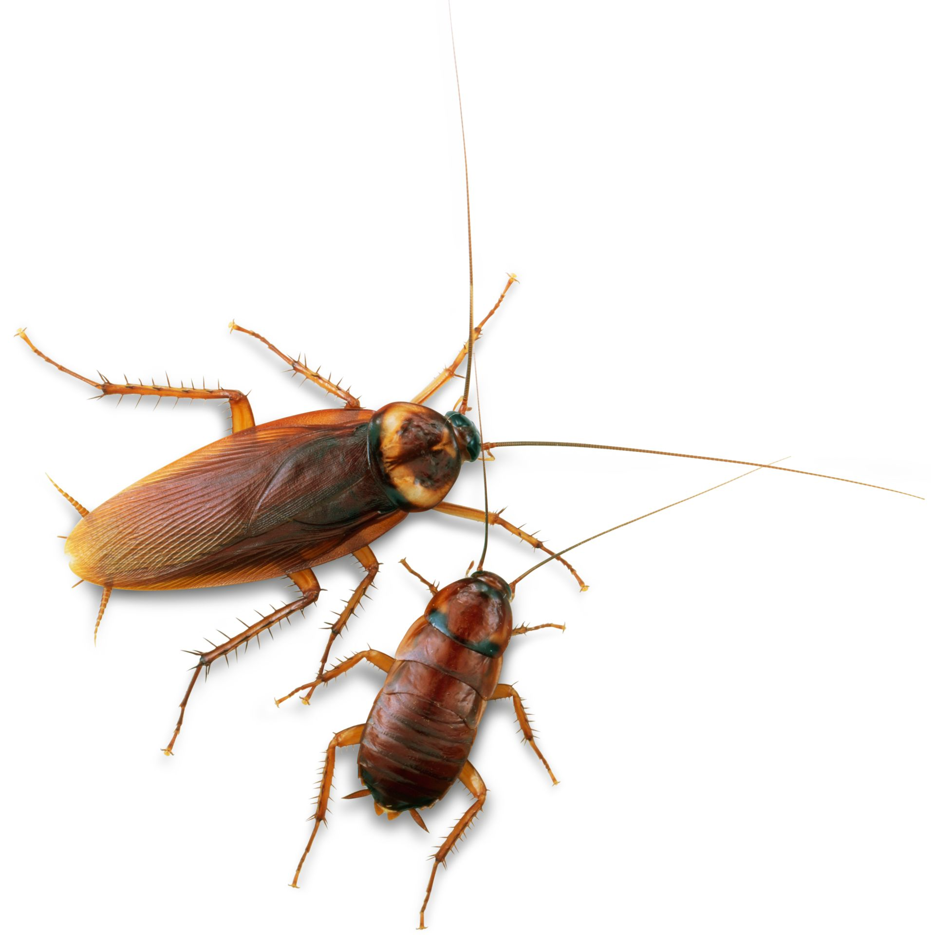 1920x1920 Insects For Kids How Many Legs Insects Have Dk Find Out