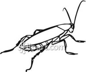 300x250 Outline Or Drawing Of A Roach Royalty Free Clipart Picture