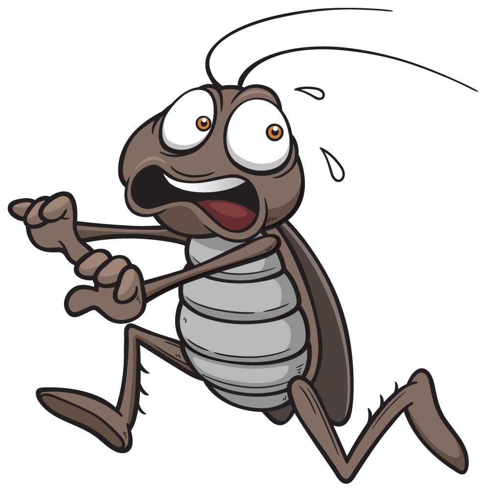 1024x1024 Roach Sense Pitara Kids Network