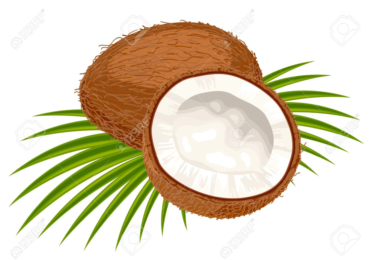 1300x911 Coconut Clipart Coconut Leaves