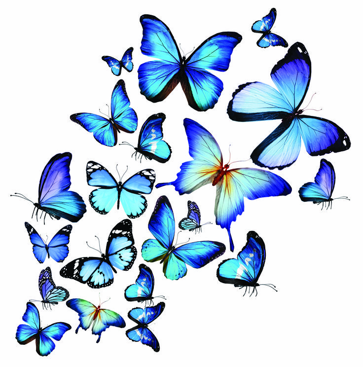 Colorful Butterflies Images