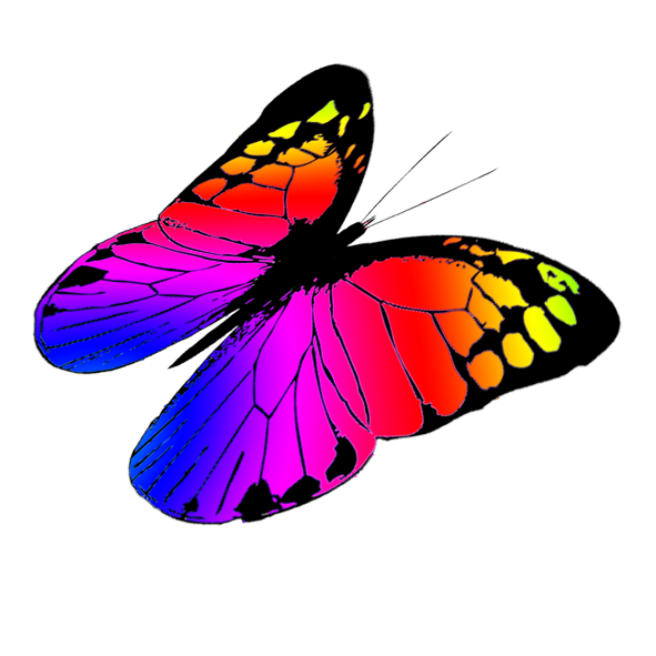 591x591 Butterfly Clipart Colorful Flying Butterfly