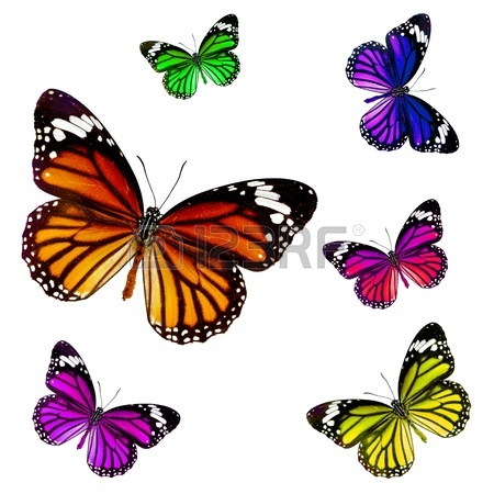 450x450 Colorful Butterfly Images Amp Stock Pictures. Royalty Free Colorful
