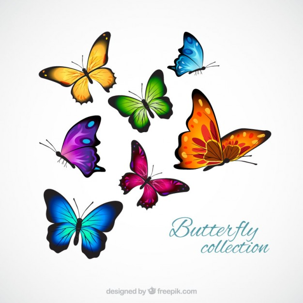 626x626 Realistic And Colorful Butterflies Vector Free Download