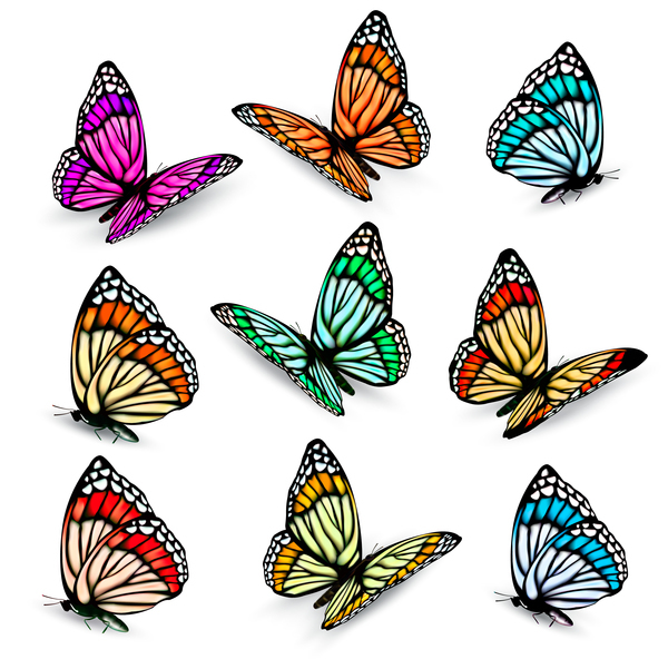 600x601 Set Of Colorful Butterflies Vector Material 09