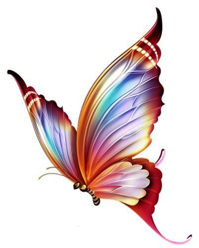 402x500 493 Best Butterflies Images Caterpillar