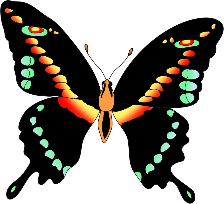 787x714 Beautiful Butterfly Images