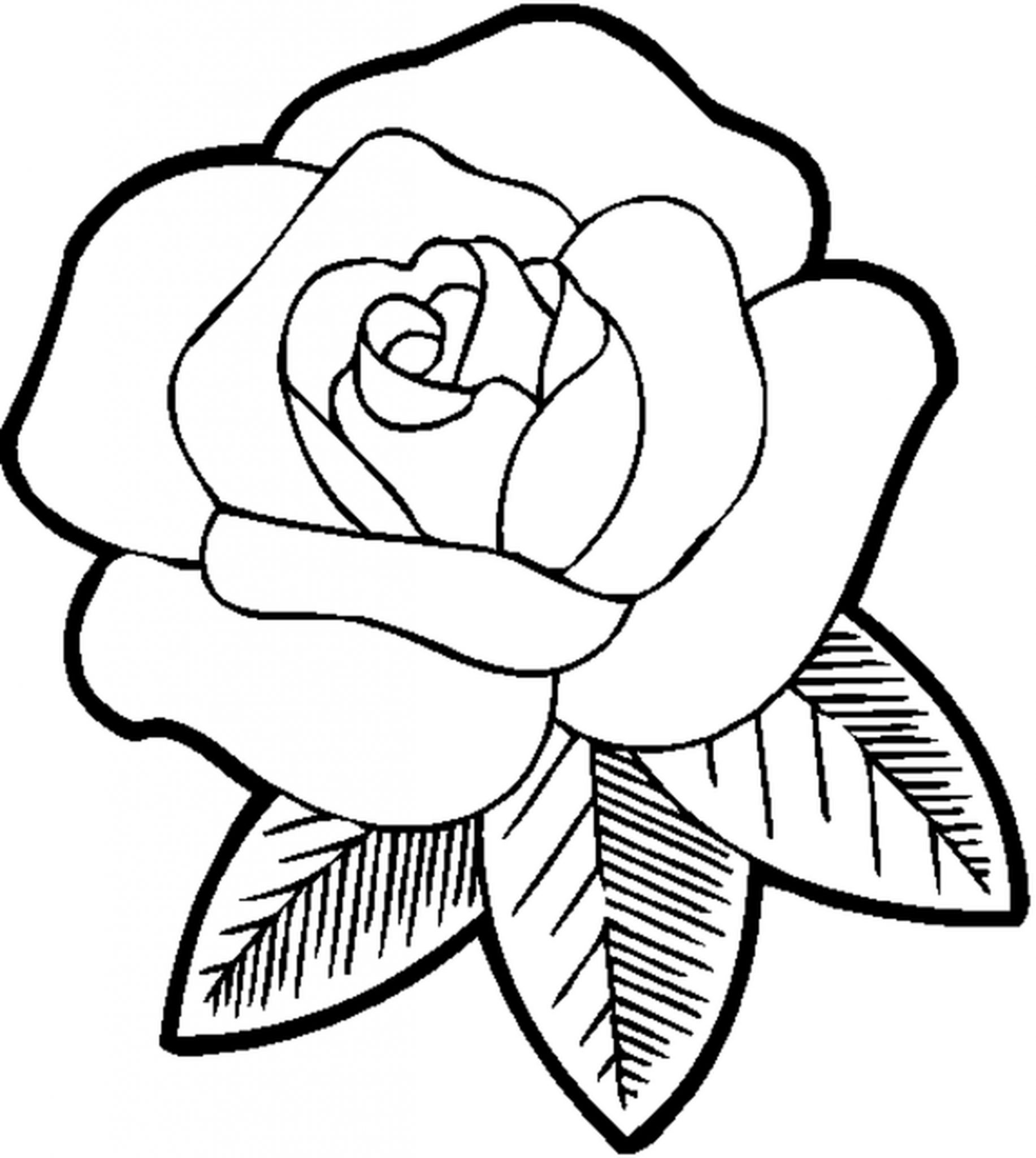1833x2048 Rose Flower Coloring Pages For Girls
