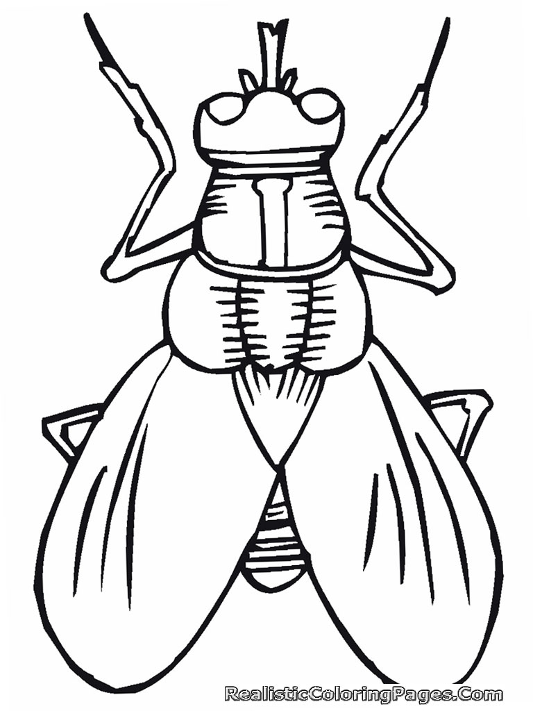 768x1024 Realistic Insect Coloring Pages Realistic Coloring Pages
