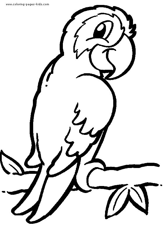 560x781 Detailed Animal Coloring Pages Parrot Coloring Pages, Color
