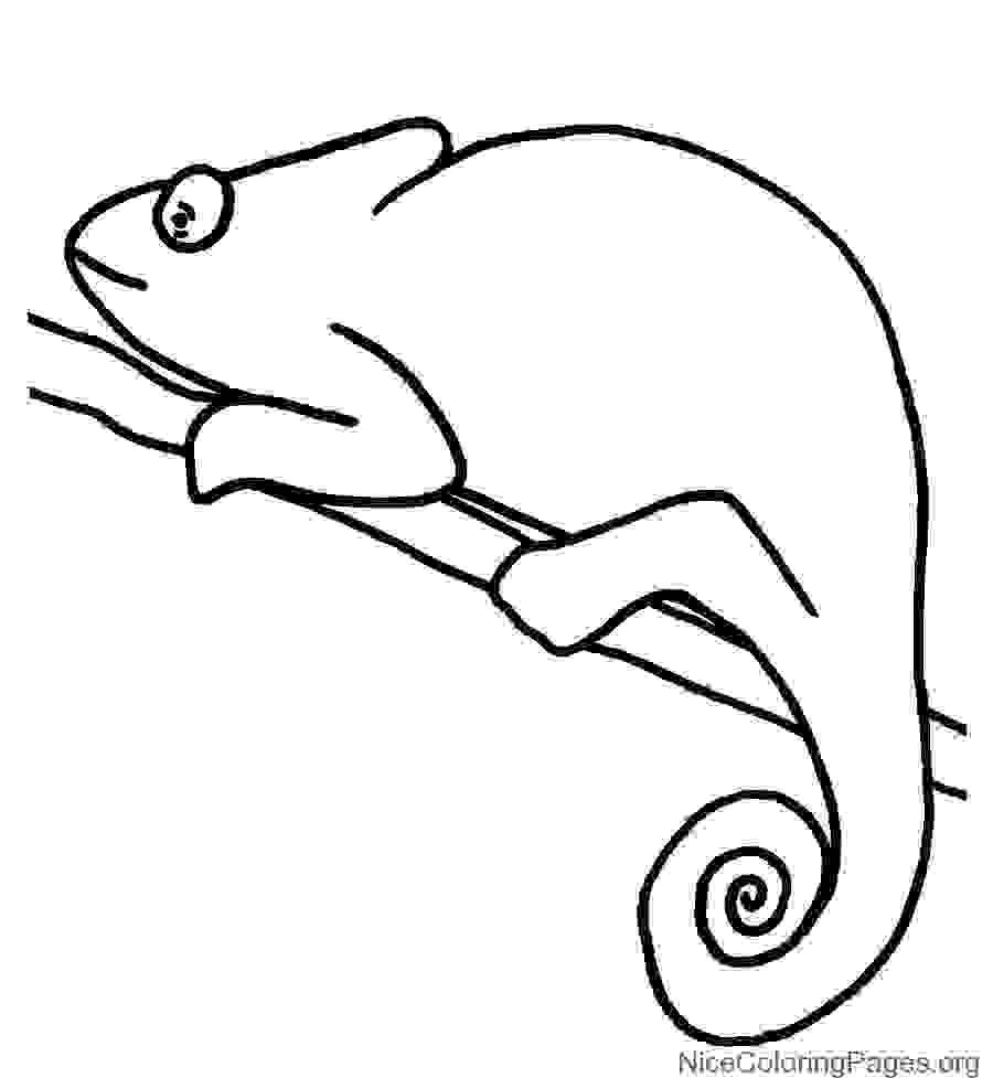 900x977 Innovative Chameleon Coloring Page For Kindergarten About