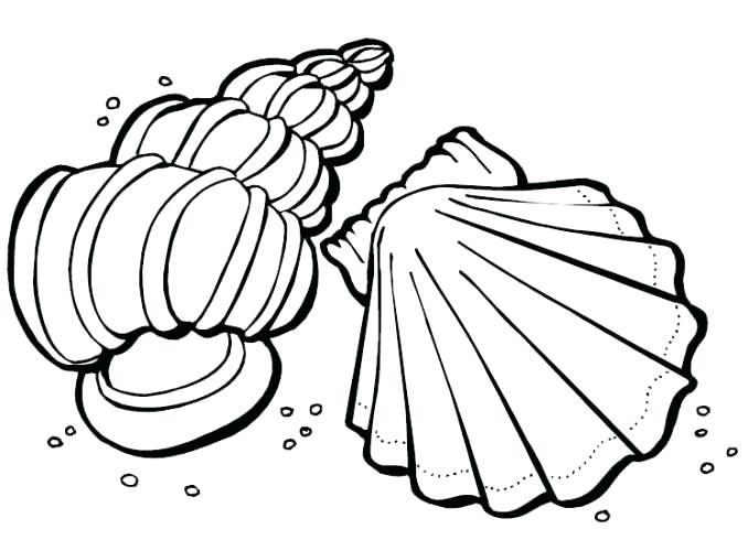 678x500 Outstanding Glamorous Sea Shell Coloring Pages Print Printable