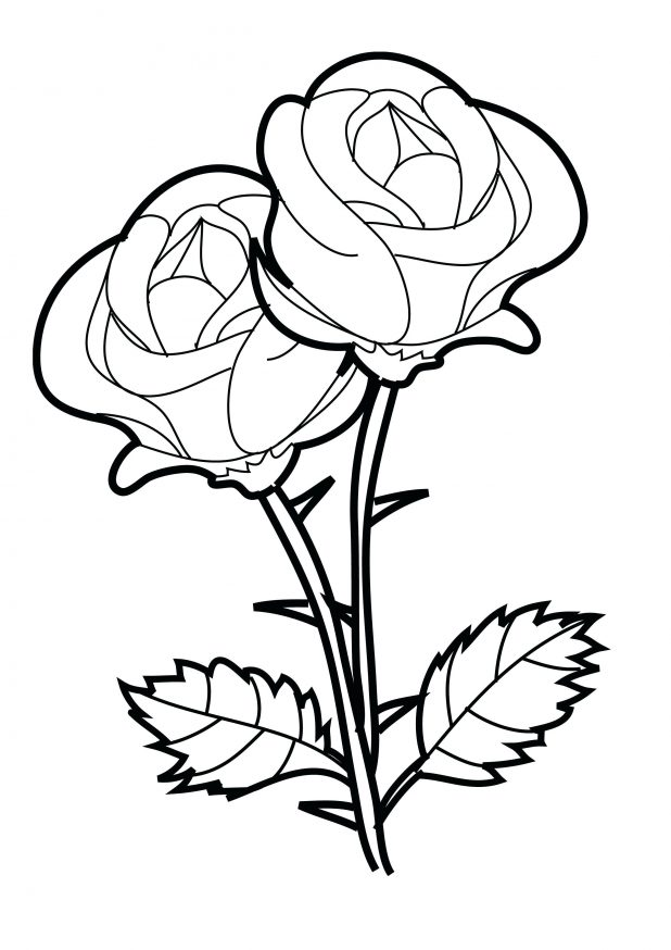 618x874 Coloring Pages Of Rose Trend 34 For Your Kids Online With Coloring