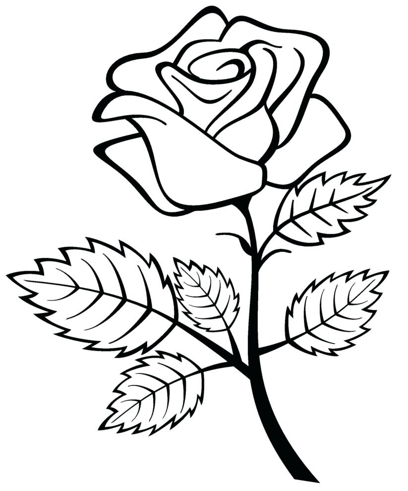 823x990 Coloring Pages Luxury Roses Coloring Pages Rose For Kids Roses