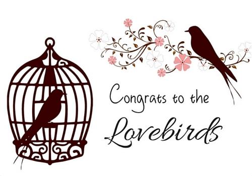 500x350 Love Birds Congratulations! Free Congratulations Ecards, Greeting