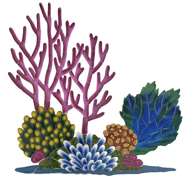 650x613 Best Coral Reef Clipart