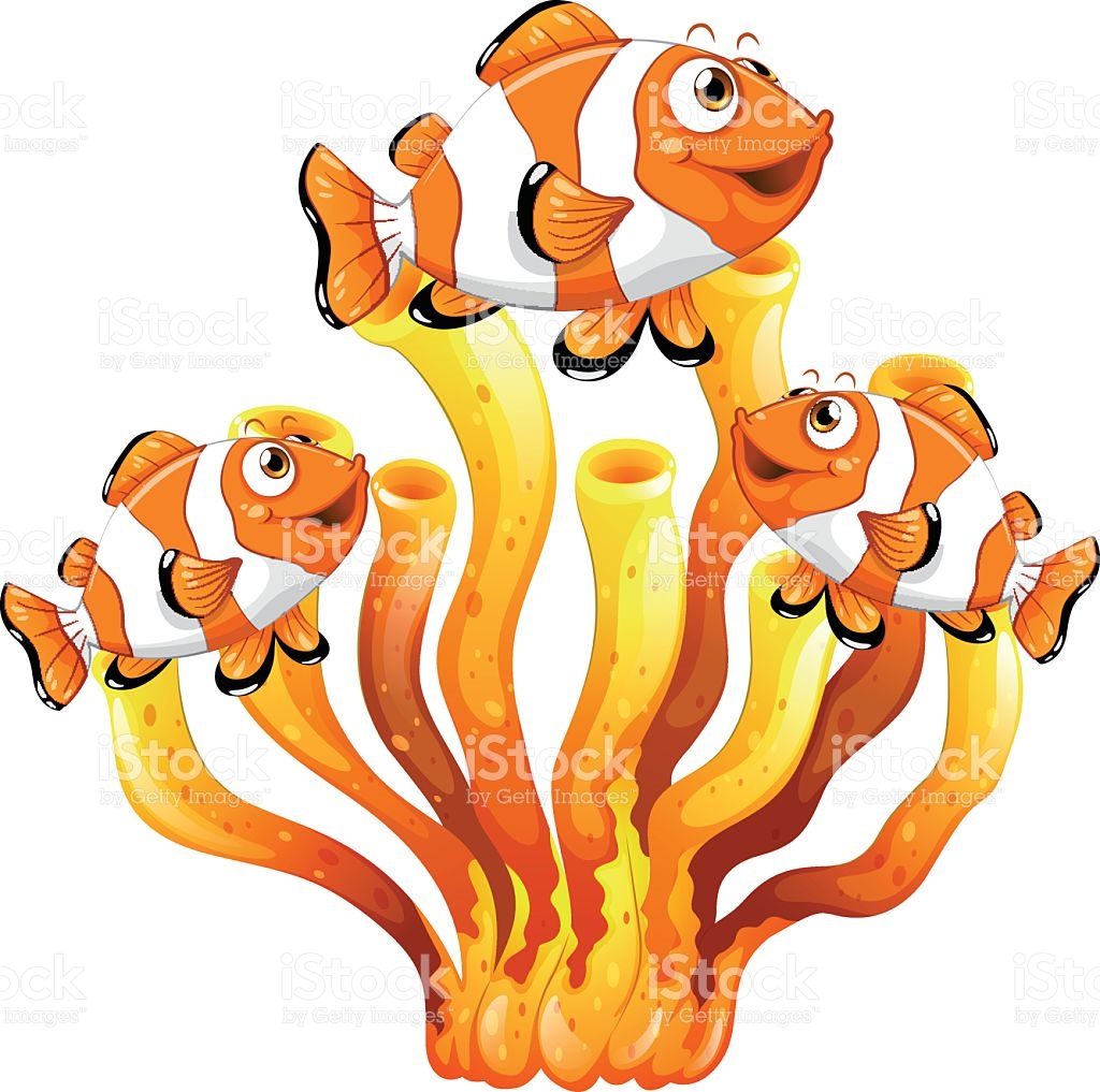 1024x1017 Clownfish Clipart Coral Reef Fish