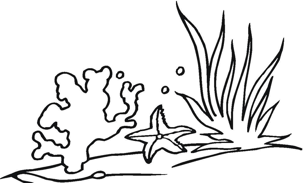 1200x727 Drawn Seaweed Coloring