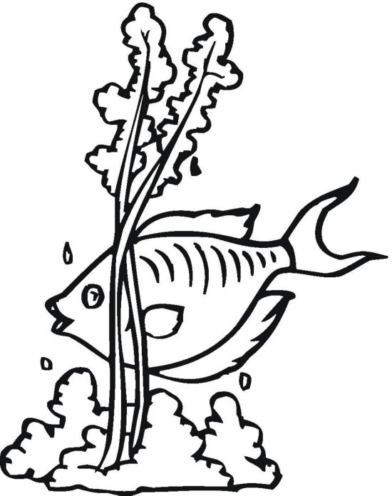 550x696 Seaweed Clipart Black And White