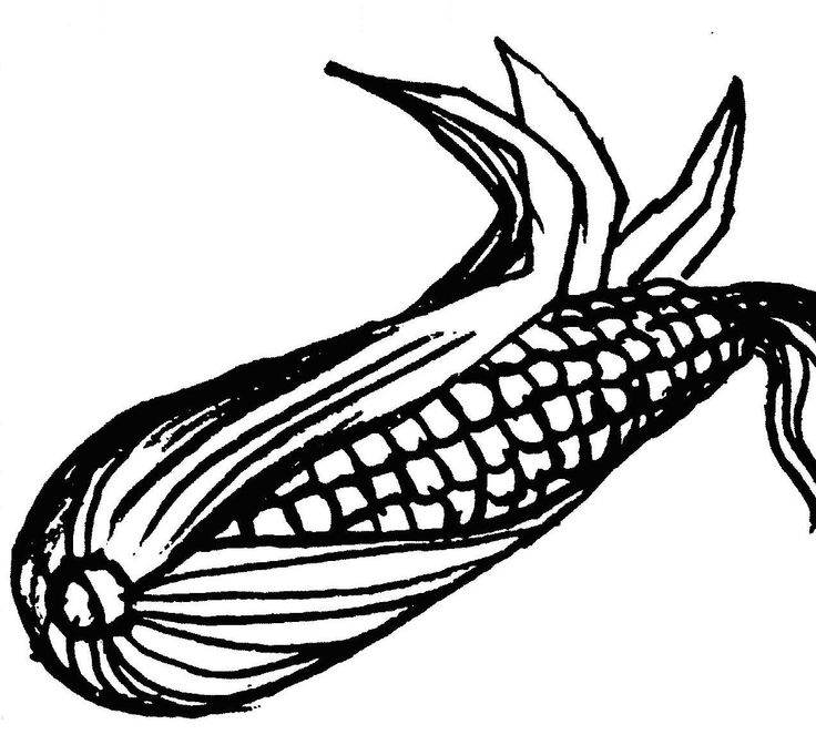 736x672 Ear Of Corn Clipart Black And White Amp Ear Of Corn Clip Art Black