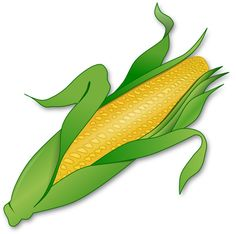 236x234 Ear Corn Illustrations And Clipart. 365 Ear Corn Royalty Free