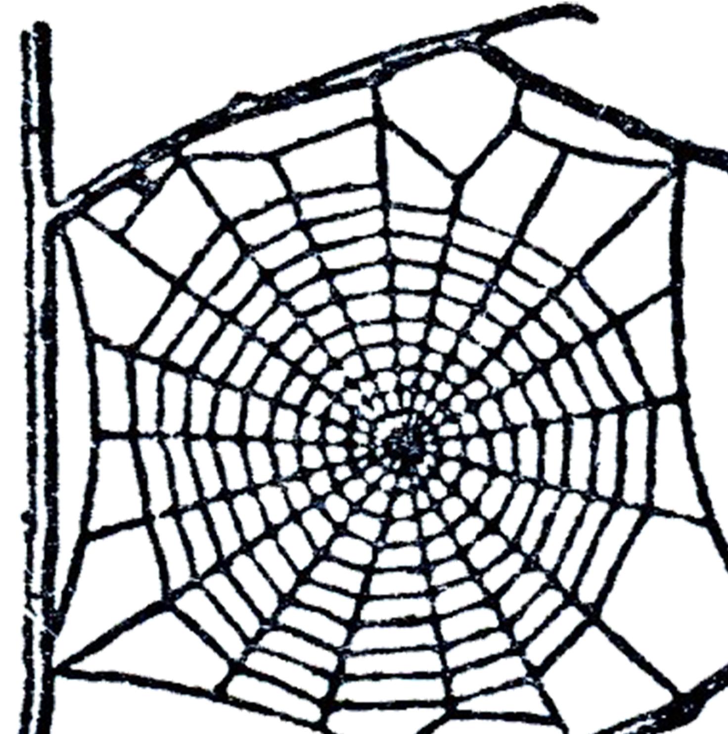 1472x1484 Free Spider Web Clip Art The Graphics Fairy