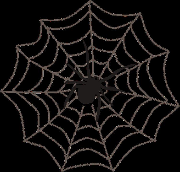 752x720 Drawn Spider Web Transparent