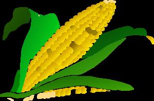 300x198 Corn Gradient Clip Art