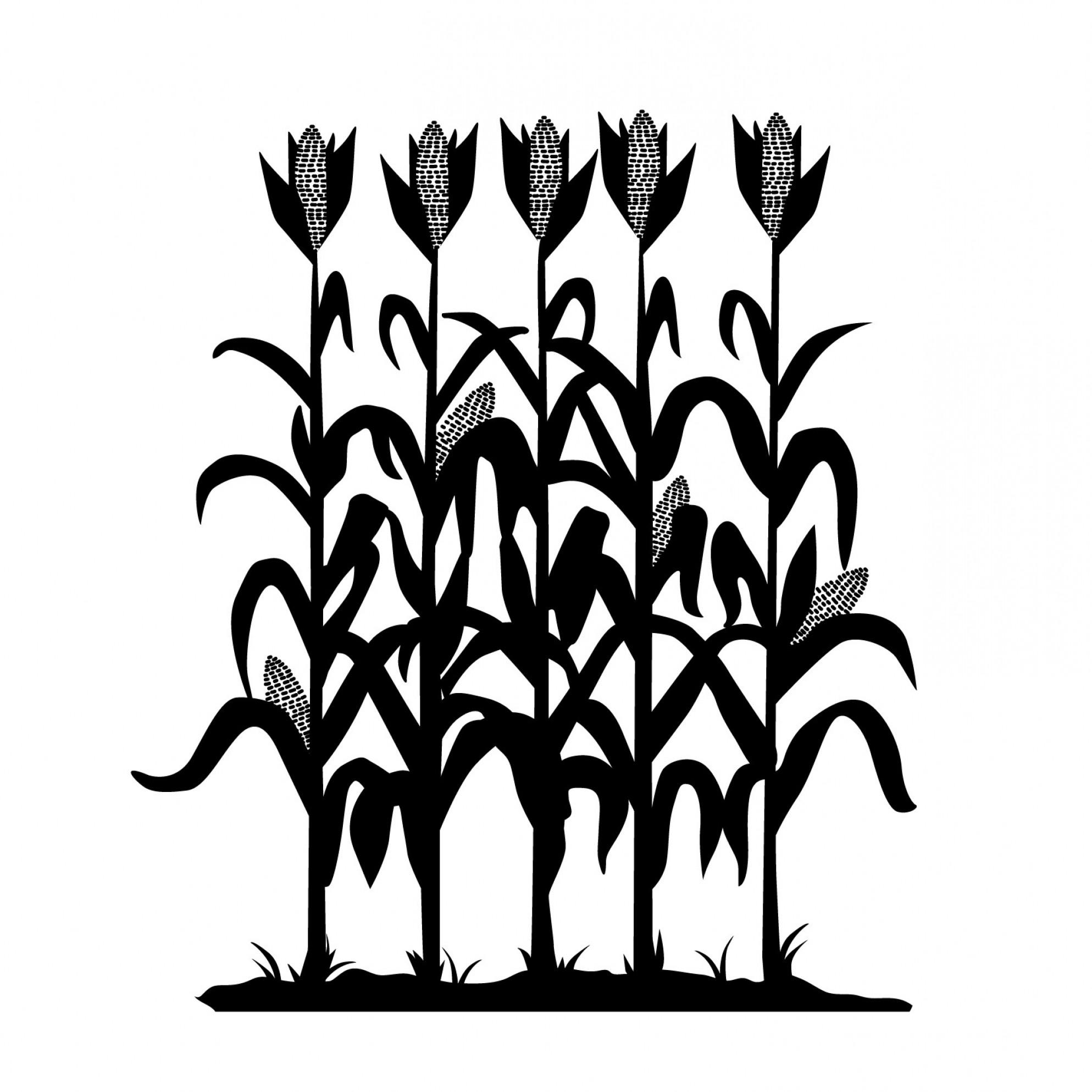 Cornfield Clipart | Free download best Cornfield Clipart ...