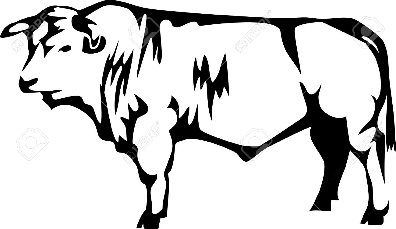 1300x752 Beef Breed Of Cattle Royalty Free Cliparts, Vectors, And Stock