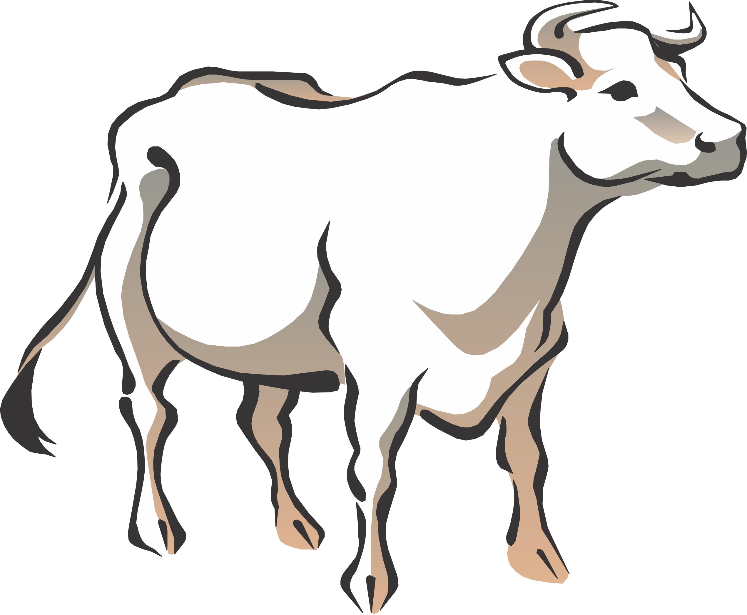 2541x2092 White Cow Clipart
