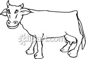300x208 And White Smiling Cow