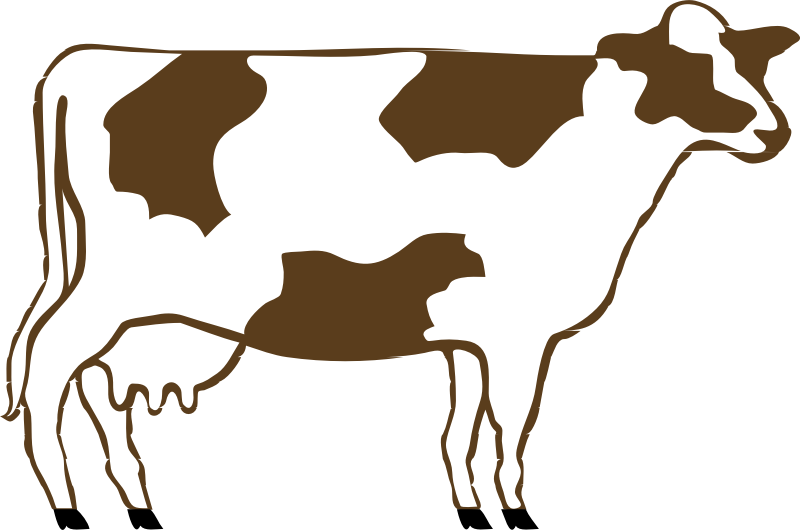 800x530 Download Cow Clip Art ~ Free Clipart Of Cows Cute Calfs, Bulls Amp More