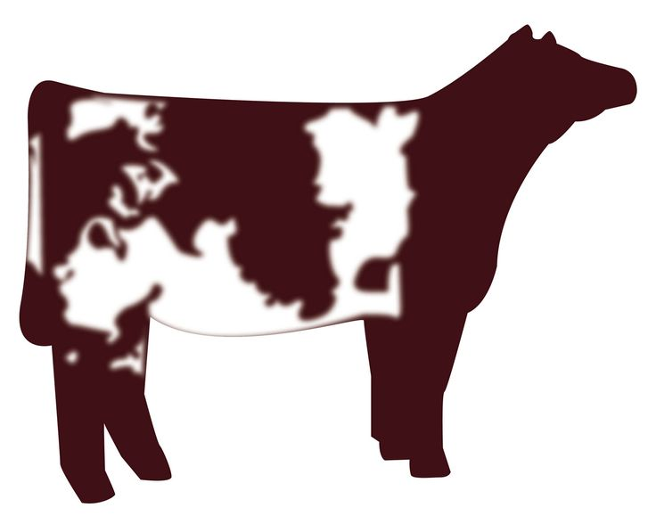 736x588 Show Heifer Clip Art Shorthorn Heifer Vector Graphic Cows