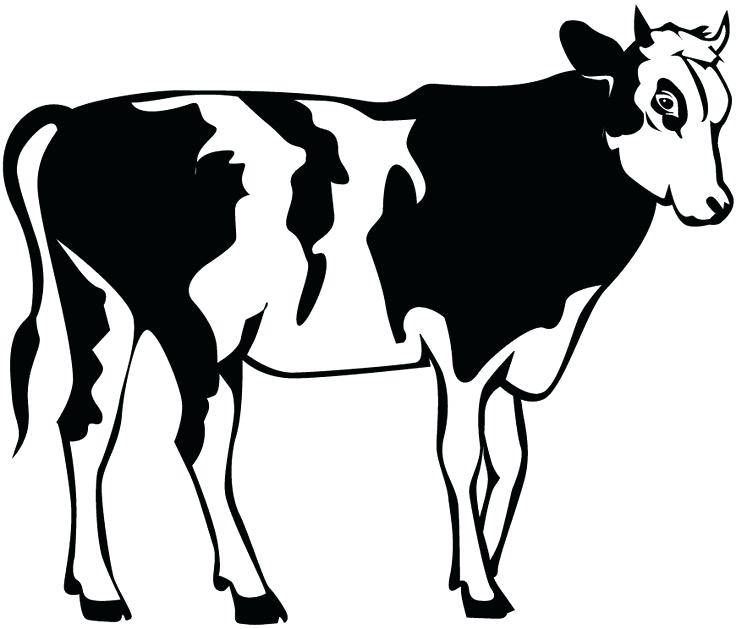 736x629 Cow Clipart Pin Cow Stencil 1 Clipart Bible Woman Memocards.co