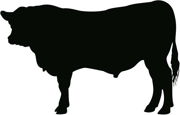 615x393 Cow Clipart Pin Cow Stencil 1 Clipart Bible Woman Memocards.co