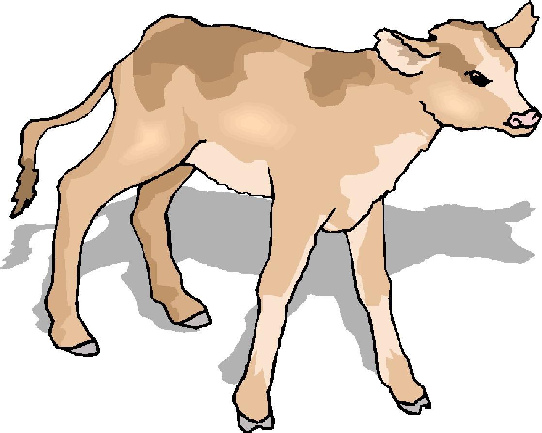 1118x893 Cattle Clipart Cow Calf