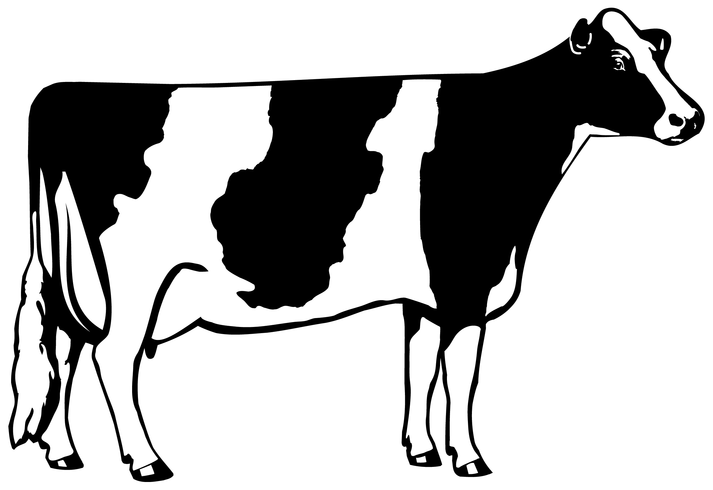 2310x1590 Black And White Cow Clip Art Images