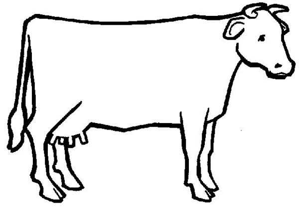 600x427 Cow Outline Clipart