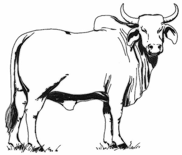 600x509 Cow Clip Art Free Holding A Sign Free Clipart Images 2 Clipartix