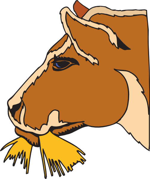 504x600 Cow Eating Hay Clip Art