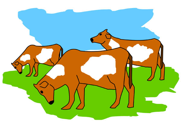 600x407 Cow Clipart Herd Cattle